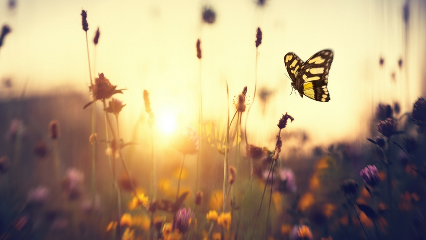 5 Ways to Bloom with the Spring Equinox