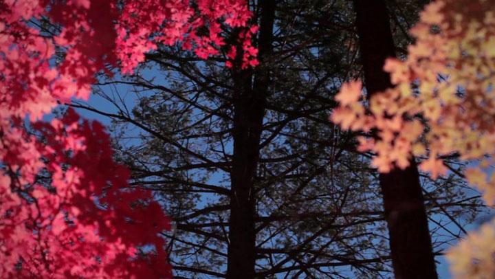 Tree Meditation: Breathing Life Force