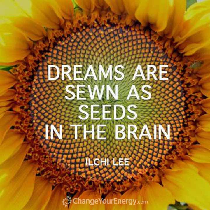 Dreams sewn seeds brain